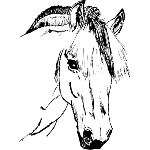 Fjordpferd, Norweger Norwegerpony Pony Stehmähne