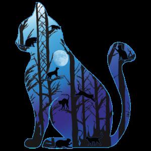 Katze in der Nacht