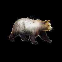 Mondbär