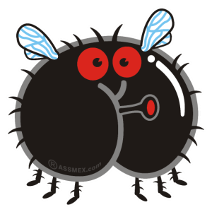Assmex Fliege