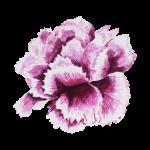 Fleur de réconfort