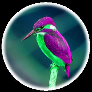 auffällige Vogel