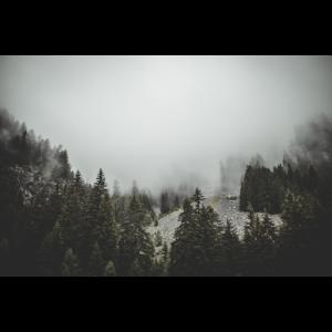 Wald Nebel Dunkel Geschenk