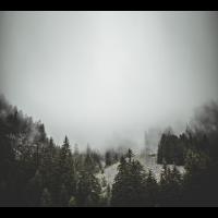 Wald Nebel Fotografie Geschenk