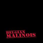 Malinois Schutzdienst