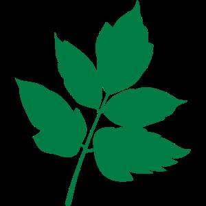 Wald Blatt forest Leaf 7