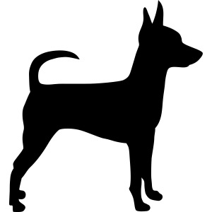 Standing Toy Fox Terrier