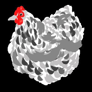 Dickes Huhn, weiß