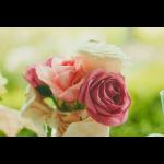 pink roses fl.jpg