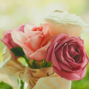 pink roses fl sq jpg