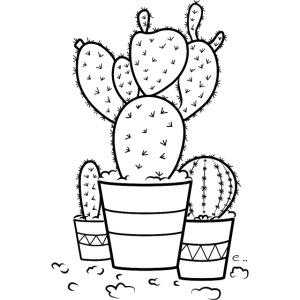 Cactus bien piquants