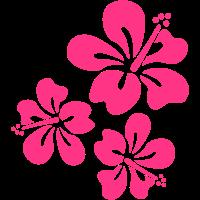 hibiskus sommer blumen