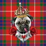 Mops Pug the King Roses schottisches Muster Tartan