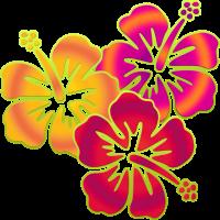 BALI hibiscus blooms trio