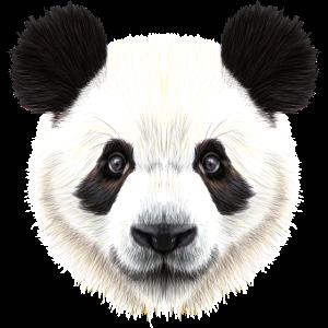 Panda Bär! Süß!