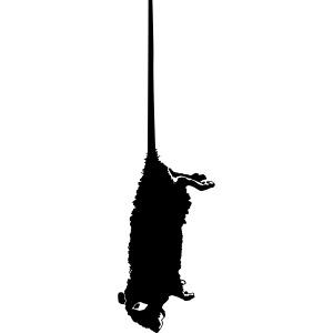 rat mort pendu