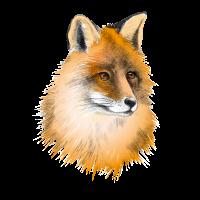 Fuchs - illustriert