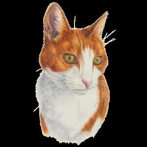 Katzen-Liebhaber-Kunst