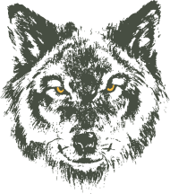 Neue Motive und Topseller: Wolf mit gelben Augen