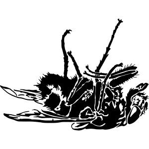 mouche morte