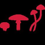 Pilze, Psylocibin Speisen Töten Fliegen