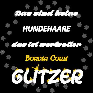 Border Collie Glitzer h8GU