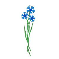 flomory feldblume