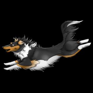 Shetland Schwarz Tricolor