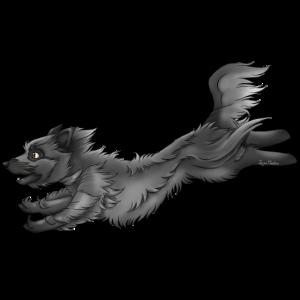 Pyrenäen-Schäferhund Grau 2