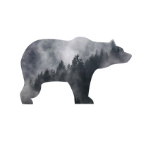 BEAR IN SMOKY FOREST