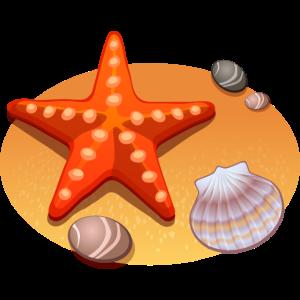 Seestar Schale und Steine