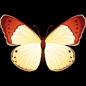 Orange Spitze