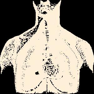 Menschliche Torso anatomische Darstellung