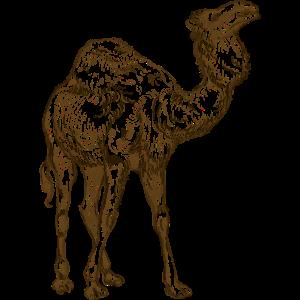 Arabische Kamelzeichnung