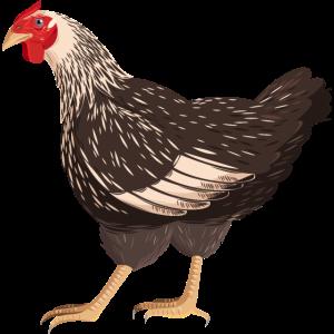 Realistisches Huhn