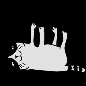 Katze spielen