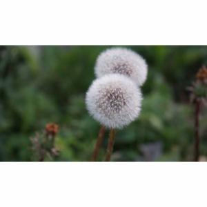 Schönes Blumenbild