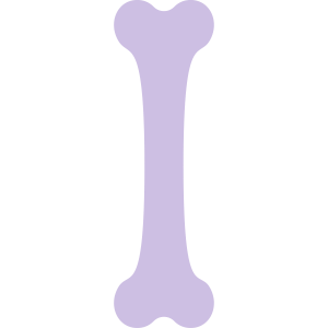 Knochen