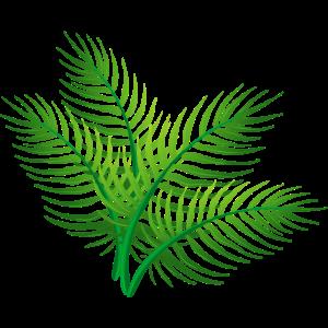 Palmtree Blätter