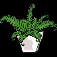 Innenpflanze