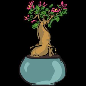 Bansai-Pflanze