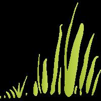 wildes Gras