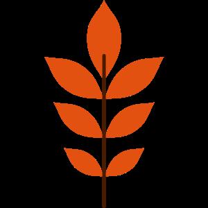 Walnussblatt