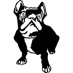 french bulldogge