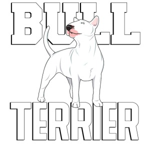 bullterrier3