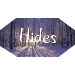 Hides Winter Woods
