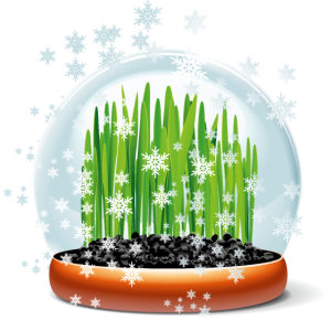 Gras in der Schneekugel