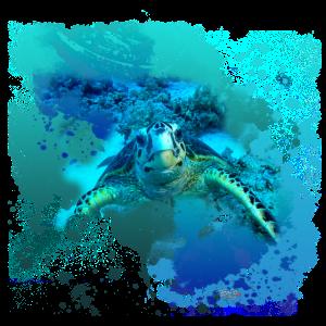 Turtlebay-2017