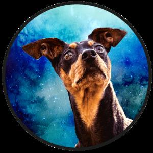 Zwergpinscher Weltraum Pinscher Dobermann Geschenk