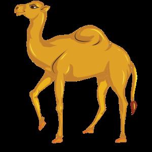 Vector Nettes Kamel